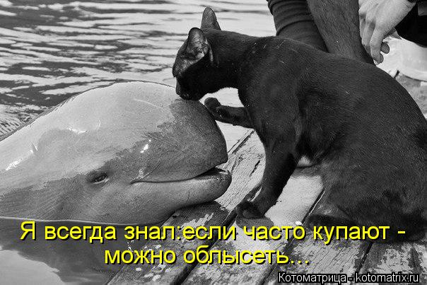 Котоматрица: Я всегда знал:если часто купают - можно облысеть...