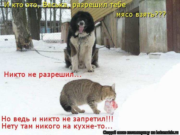 Котоматрица: И кто это, Васька, разрешил тебе мясо взять??? Никто не разрешил... Но ведь и никто не запретил!!! Нету там никого на кухне-то...