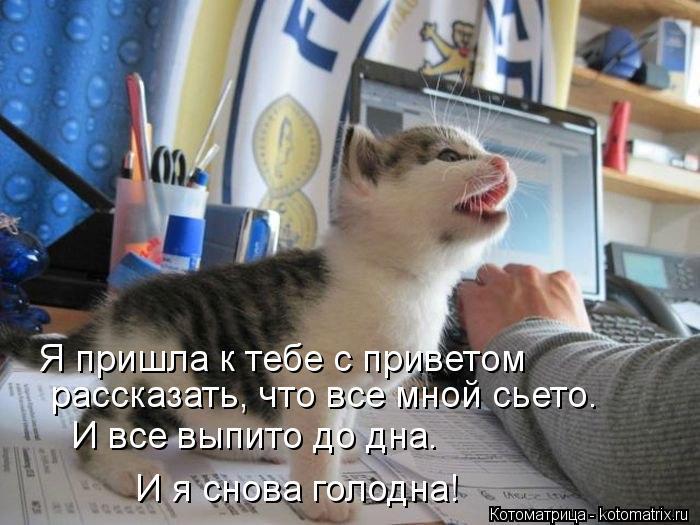 Котоматрица: Я пришла к тебе с приветом рассказать, что все мной сьето. И все выпито до дна. И я снова голодна!