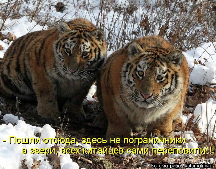 Котоматрица: - Пошли отсюда, здесь не пограничники  а звери, всех китайцев сами переловили!!!