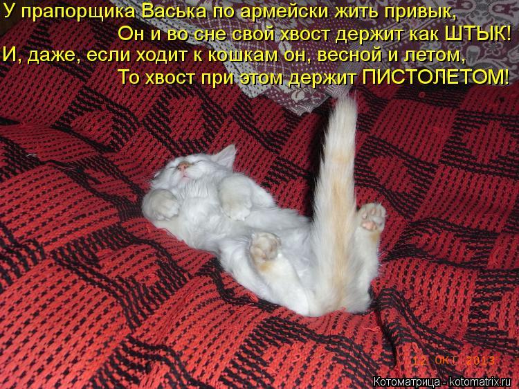 Котоматрица: У прапорщика Васька по армейски жить привык,  Он и во сне свой хвост держит как ШТЫК! И, даже, если ходит к кошкам он, весной и летом, То хвост п