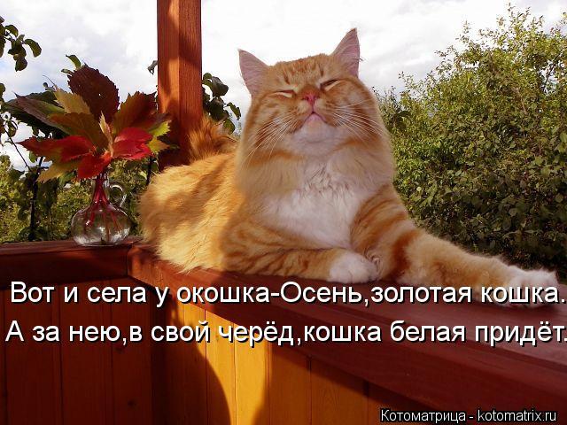 Котоматрица: Вот и села у окошка-Осень,золотая кошка. А за нею,в свой черёд,кошка белая придёт..