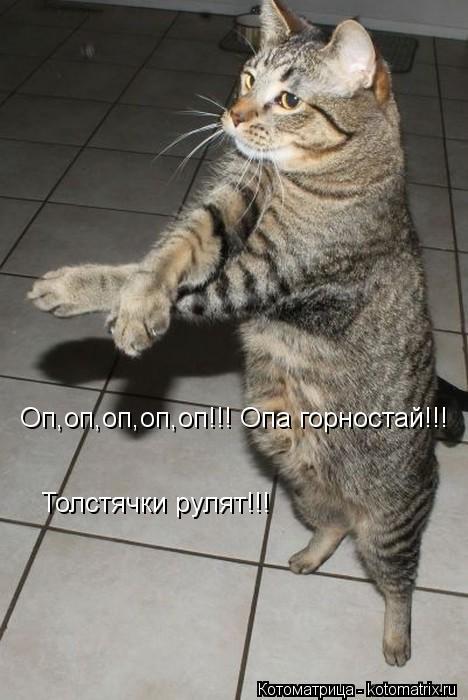 Котоматрица: Оп,оп,оп,оп,оп!!! Опа горностай!!! Толстячки рулят!!!