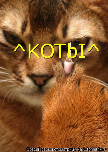 Котоматрица: ^KOTbI^