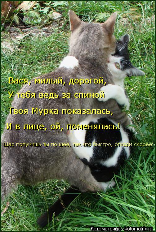 Котоматрица: Вася, милый, дорогой,  У тебя ведь за спиной  Твоя Мурка показалась,  И в лице, ой, поменялась!  Щас получишь ты по шее, так что быстро, отходи ск