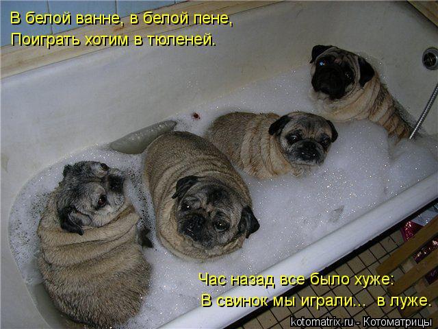 Котоматрица: В белой ванне, в белой пене, Поиграть хотим в тюленей. Час назад все было хуже: В свинок мы играли...  в луже.