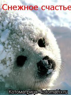Котоматрица: Снежное счастье