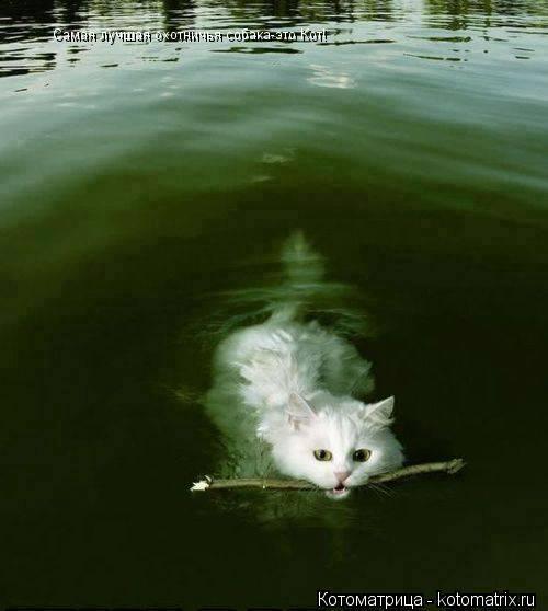 Котоматрица: Самая лучшая охотничья собака-это Кот!