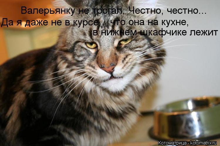 Котоматрица: Валерьянку не трогал. Честно, честно... Да я даже не в курсе,  что она на кухне,  в нижнем шкафчике лежит