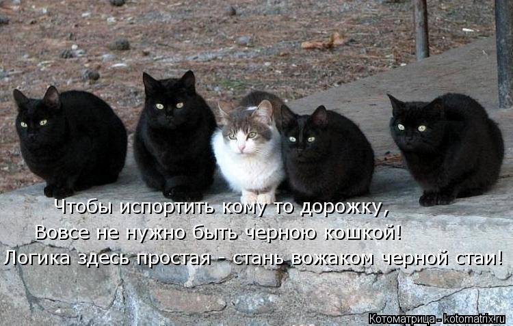 Котоматрица: Чтобы испортить кому то дорожку, Вовсе не нужно быть черною кошкой! Логика здесь простая - стань вожаком черной стаи!