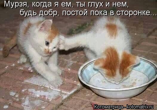 Котоматрица: Мурзя, когда я ем, ты глух и нем, будь добр, постой пока в сторонке... Мурзя, когда я ем, ты глух и нем,  будь добр, постой пока в сторонке...
