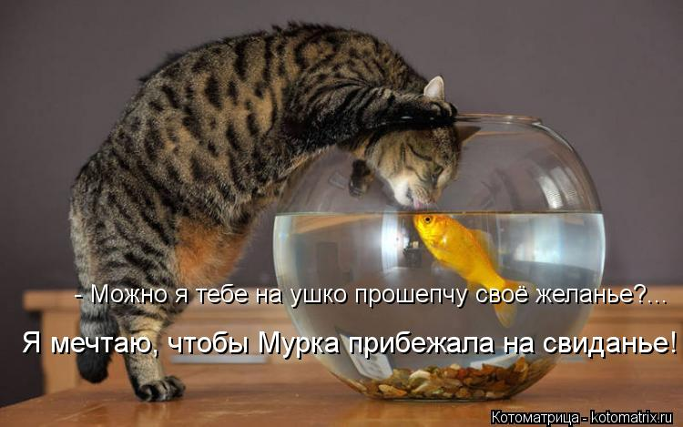 http://kotomatrix.ru/images/lolz/2013/12/04/kotomatritsa_N5.jpg