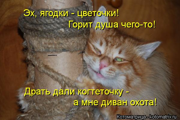 http://kotomatrix.ru/images/lolz/2013/12/04/kotomatritsa_OY.jpg