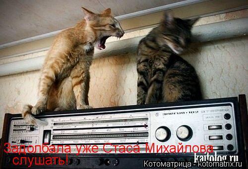 http://kotomatrix.ru/images/lolz/2013/12/04/kotomatritsa_T.jpg