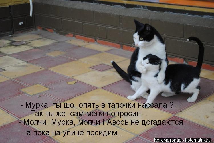 Котоматрица: - Мурка, ты шо, опять в тапочки нассала ? а пока на улице посидим... -Так ты же  сам меня попросил... - Молчи, Мурка, молчи ! Авось не догадаются,