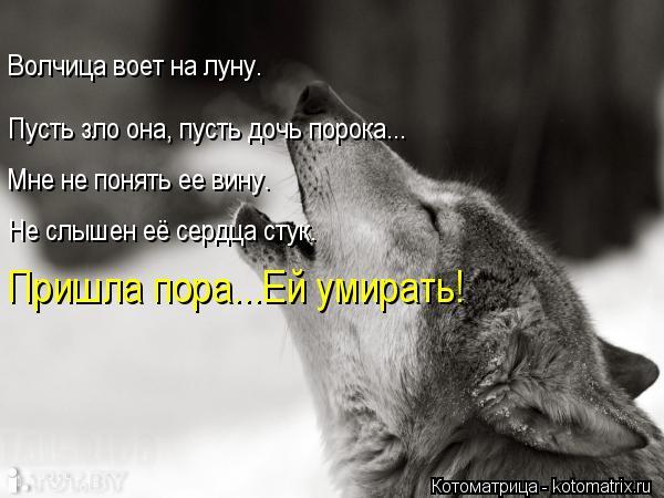 Котоматрица: Волчица воет на луну. Пусть зло она, пусть дочь порока... Мне не понять ее вину. Не слышен её сердца стук. Пришла пора...Ей умирать!