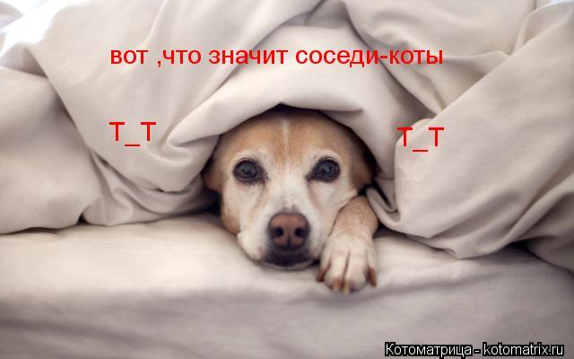 Котоматрица: вот ,что значит соседи-коты Т_Т Т_Т