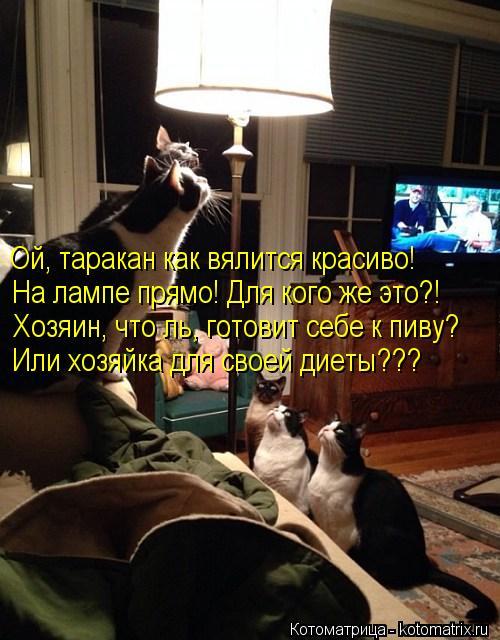 http://kotomatrix.ru/images/lolz/2013/12/04/kotomatritsa_e.jpg