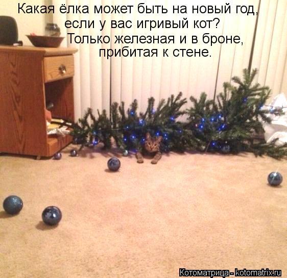 Котоматрица: Какая ёлка может быть на новый год, если у вас игривый кот? Только железная и в броне, прибитая к стене.