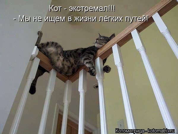 Котоматрица: Кот - экстремал!!! - Мы не ищем в жизни лёгких путей!