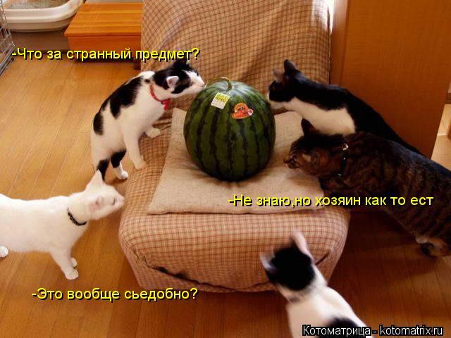 Котоматрица: -Что за странный предмет? -Это вообще сьедобно? -Не знаю,но хозяин как то ест