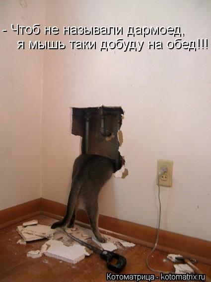 Котоматрица: - Чтоб не называли дармоед, я мышь таки добуду на обед!!!