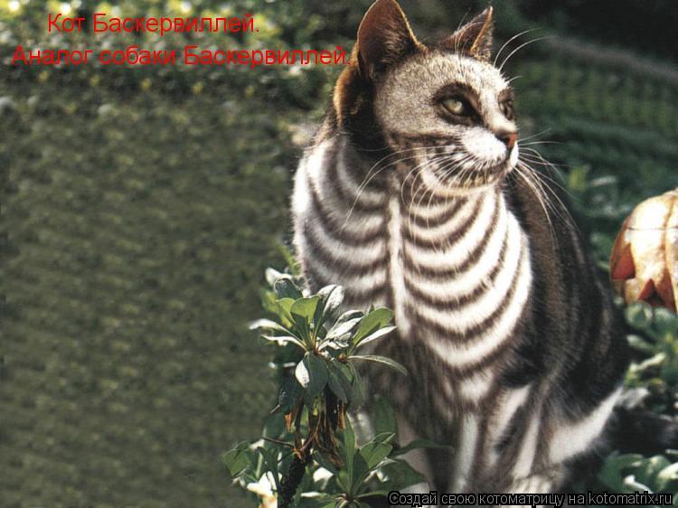 Котоматрица: Кот Баскервиллей.  Аналог собаки Баскервиллей.