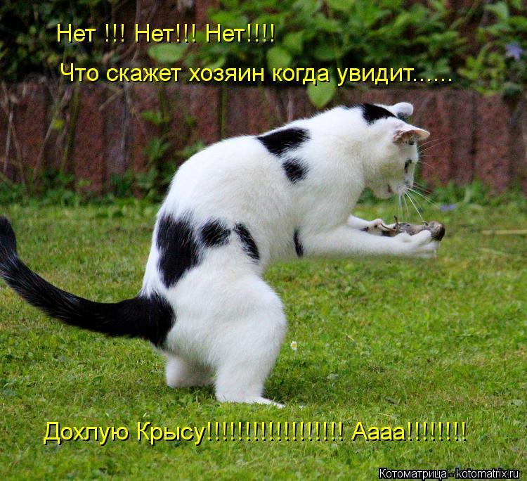 Котоматрица: Нет !!! Нет!!! Нет!!!! Что скажет хозяин когда увидит...... Дохлую Крысу!!!!!!!!!!!!!!!!!! Аааа!!!!!!!!