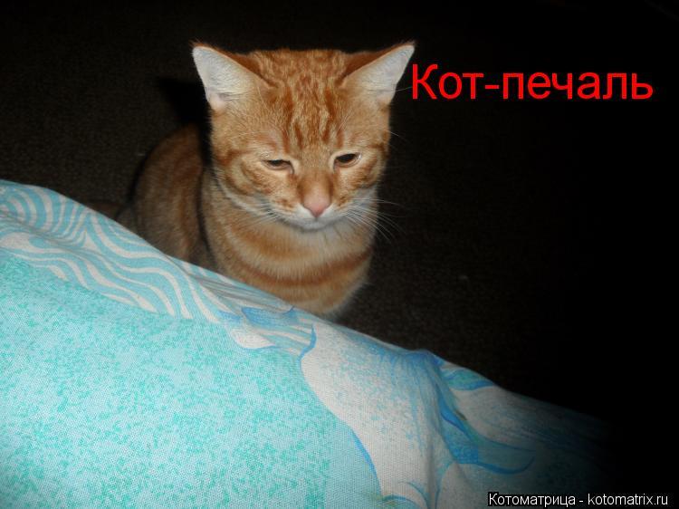 Котоматрица: Кот-печаль
