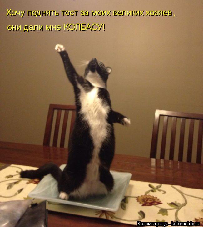 Котоматрица: Хочу поднять тост за моих великих хозяев  , они дали мне КОЛБАСУ!