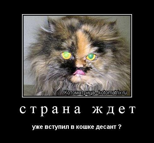 Котоматрица: страна ждет  уже вступил в кошке десант ?