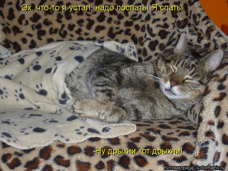 Котоматрица: Эх, что-то я устал, надо поспать! Я спать! -Ну дрыхни кот дрыхни!