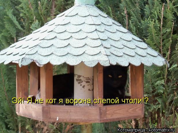 Котоматрица: Эй! Я не кот я ворона,слепой чтоли!?