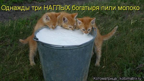 Котоматрица: Однажды три НАГЛЫХ богатыря пили молоко