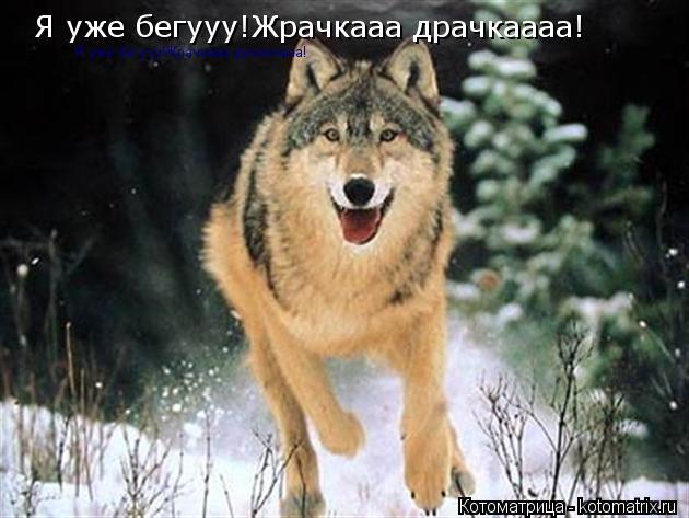 Котоматрица: Я уже бегууу!Жрачкааа драчкаааа! Я уже бегууу!Жрачкааа драчкаааа!