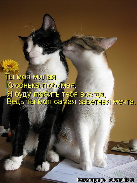 Котоматрица: Ты моя милая, Кисонька любимая. Я буду любить тебя всегда, Ведь ты моя самая заветная мечта.