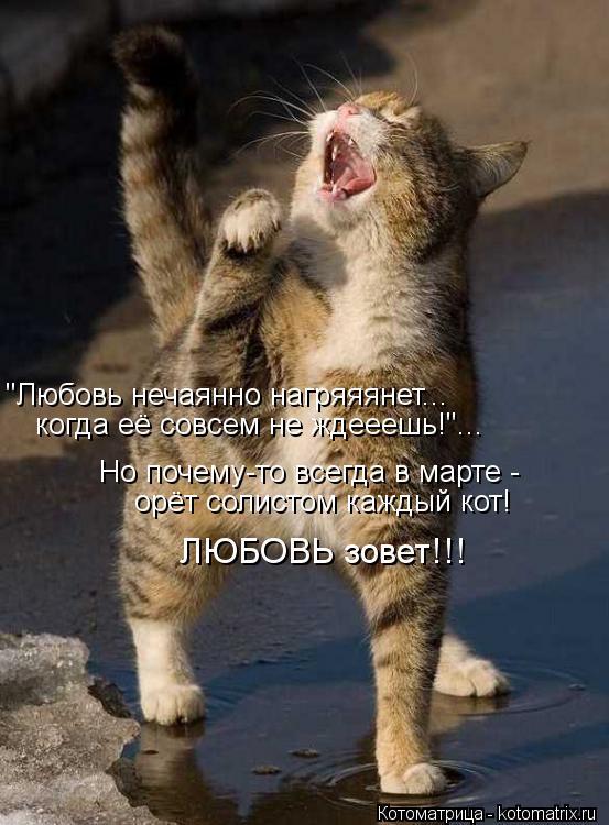 """Котоматрица: """"Любовь нечаянно нагряяянет... когда её совсем не ждееешь!""""... Но почему-то всегда в марте - орёт солистом каждый кот! ЛЮБОВЬ зовет!!!"""