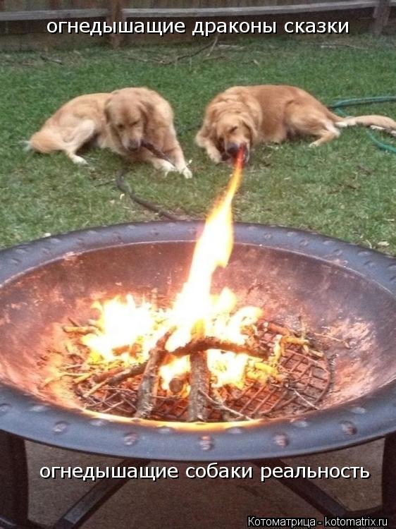 Котоматрица: огнедышащие драконы сказки  огнедышащие собаки реальность