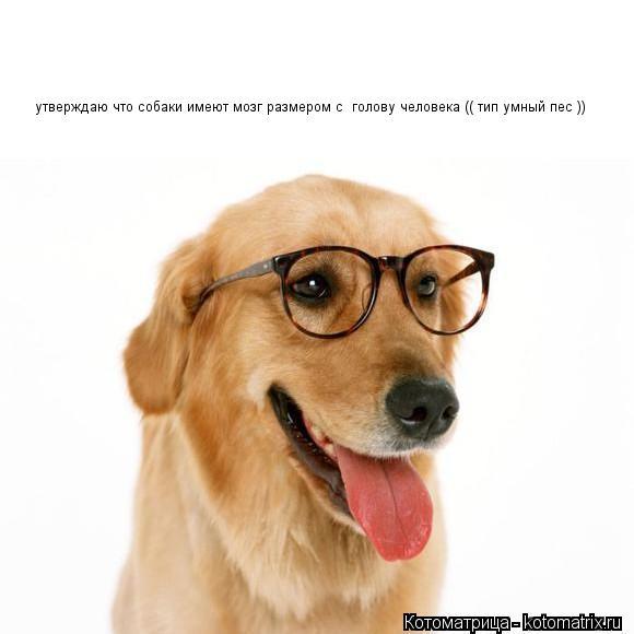 Котоматрица: утверждаю что собаки имеют мозг размером с  голову человека (( тип умный пес ))