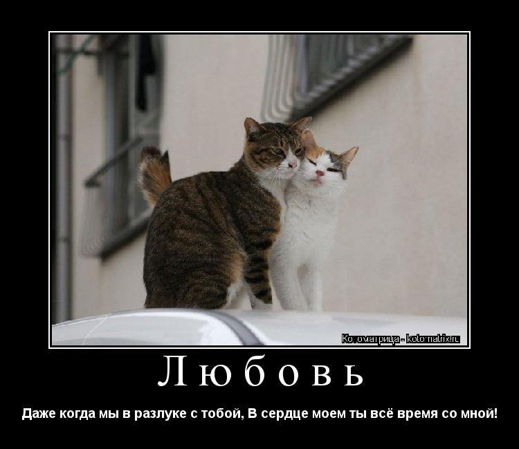 Котоматрица: Любовь Даже когда мы в разлуке с тобой, В сердце моем ты всё время со мной!