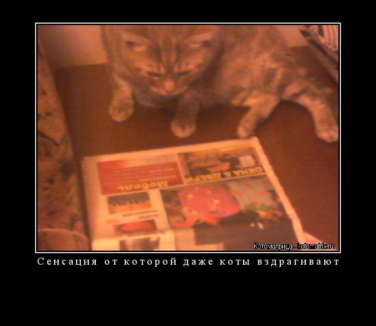 Котоматрица: Сенсация от которой даже коты вздрагивают