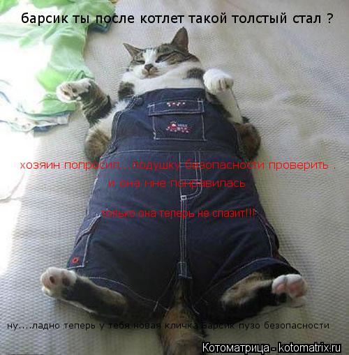 Котоматрица: барсик ты после котлет такой толстый стал ? хозяин попросил...подушку безопасности проверить . и она мне понравилась   только она теперь не с