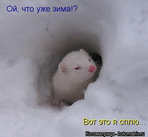 Котоматрица: Ой, что уже зима!? Вот это я сплю...