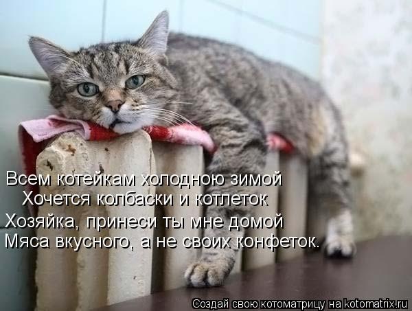 Котоматрица: Всем котейкам холодною зимой Хочется колбаски и котлеток Хозяйка, принеси ты мне домой Мяса вкусного, а не своих конфеток.