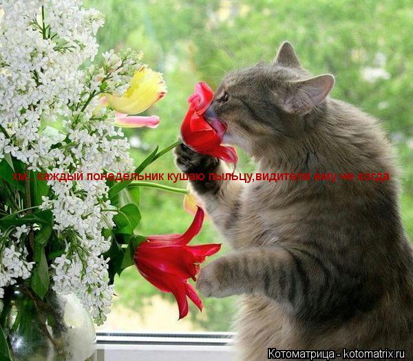 Котоматрица: хм.. каждый понедельник кушаю пыльцу,видители ему не когда