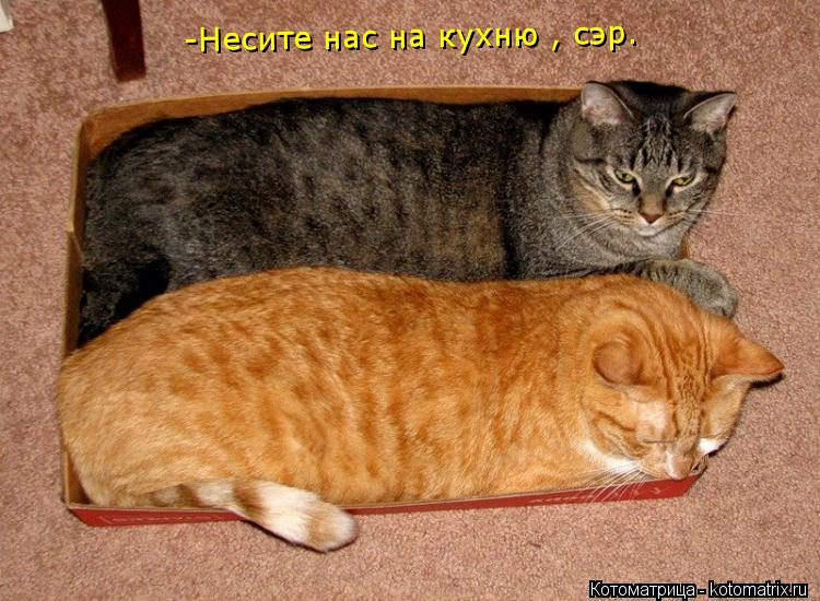 Котоматрица: -Несите нас на кухню , сэр.