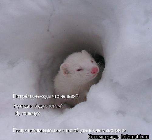 Котоматрица: Пожрём снежку,а что нельзя? Пожрём снежку,а что нельзя? Ну ладно буду снегом? Ну почему? Пушок понимаешь,мы с папой уже в снегу застряли.