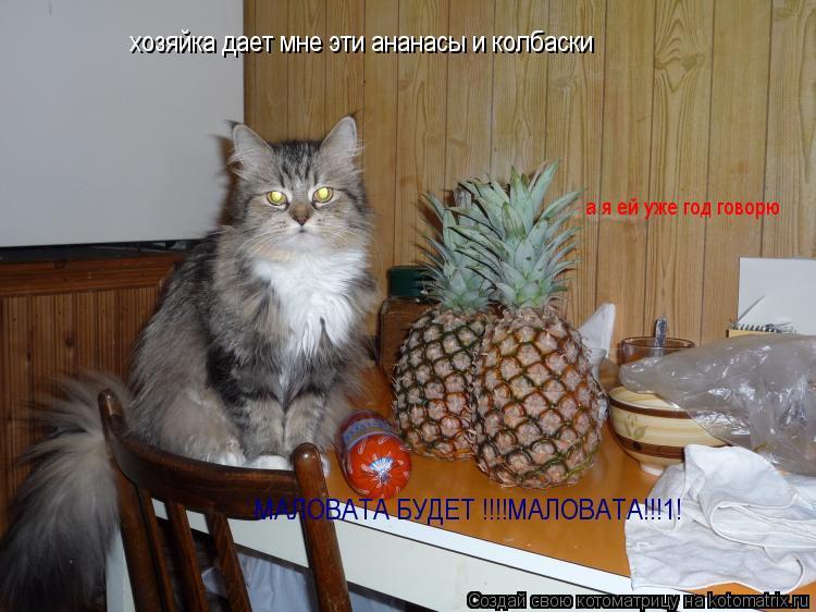 Котоматрица: хозяйка дает мне эти ананасы и колбаски а я ей уже год говорю МАЛОВАТА БУДЕТ !!!!МАЛОВАТА!!!1!