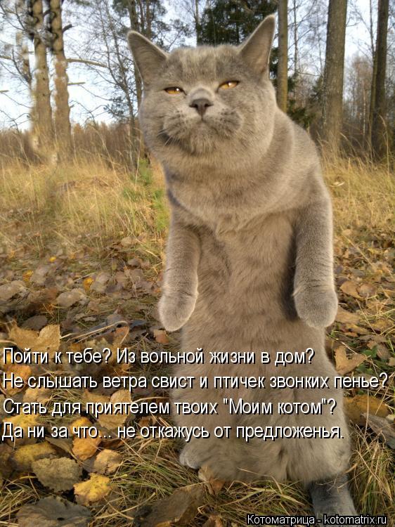 """Котоматрица: Пойти к тебе? Из вольной жизни в дом? Не слышать ветра свист и птичек звонких пенье? Стать для приятелем твоих """"Моим котом""""? Да ни за что... не о"""