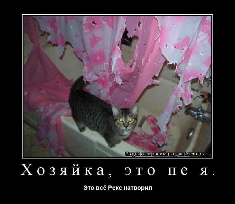 Котоматрица: Хозяйка, это не я. Это всё Рекс натворил